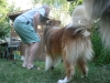 2013-07-20-lionheart-collies-22