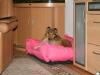2013-12-20 Hundebetten - 1