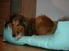2013-12-20 Hundebetten - 2