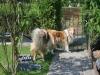 2014-05-26 Giny und Anouk - 15