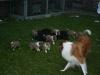 2009-12-27 - A-Wurf, 31. Tag (18)