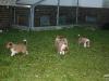 2009-12-27 - A-Wurf, 31. Tag (25)