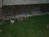 2009-12-27 - A-Wurf, 31. Tag (29)