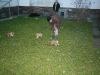 2009-12-27 - A-Wurf, 31. Tag (31)