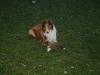 2009-12-27 - A-Wurf, 31. Tag (36)