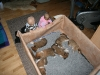 2009-12-27 - A-Wurf, 31. Tag (4)