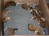 2009-12-27 - A-Wurf, 31. Tag (5)