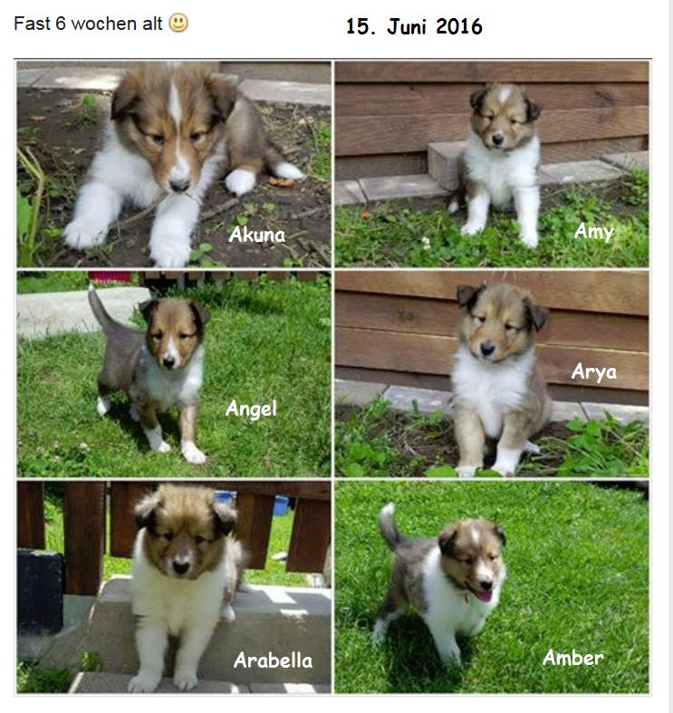 2016-05-15 Xenja A-Wurf